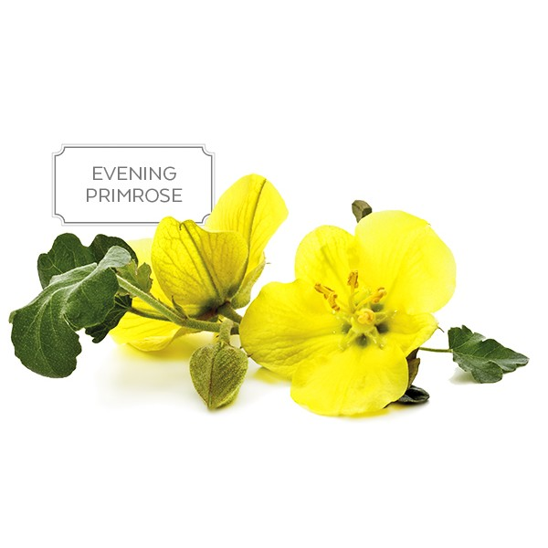 Sanderson Pure & Natural Evening Primrose Oil 1000mg 220 Capsules